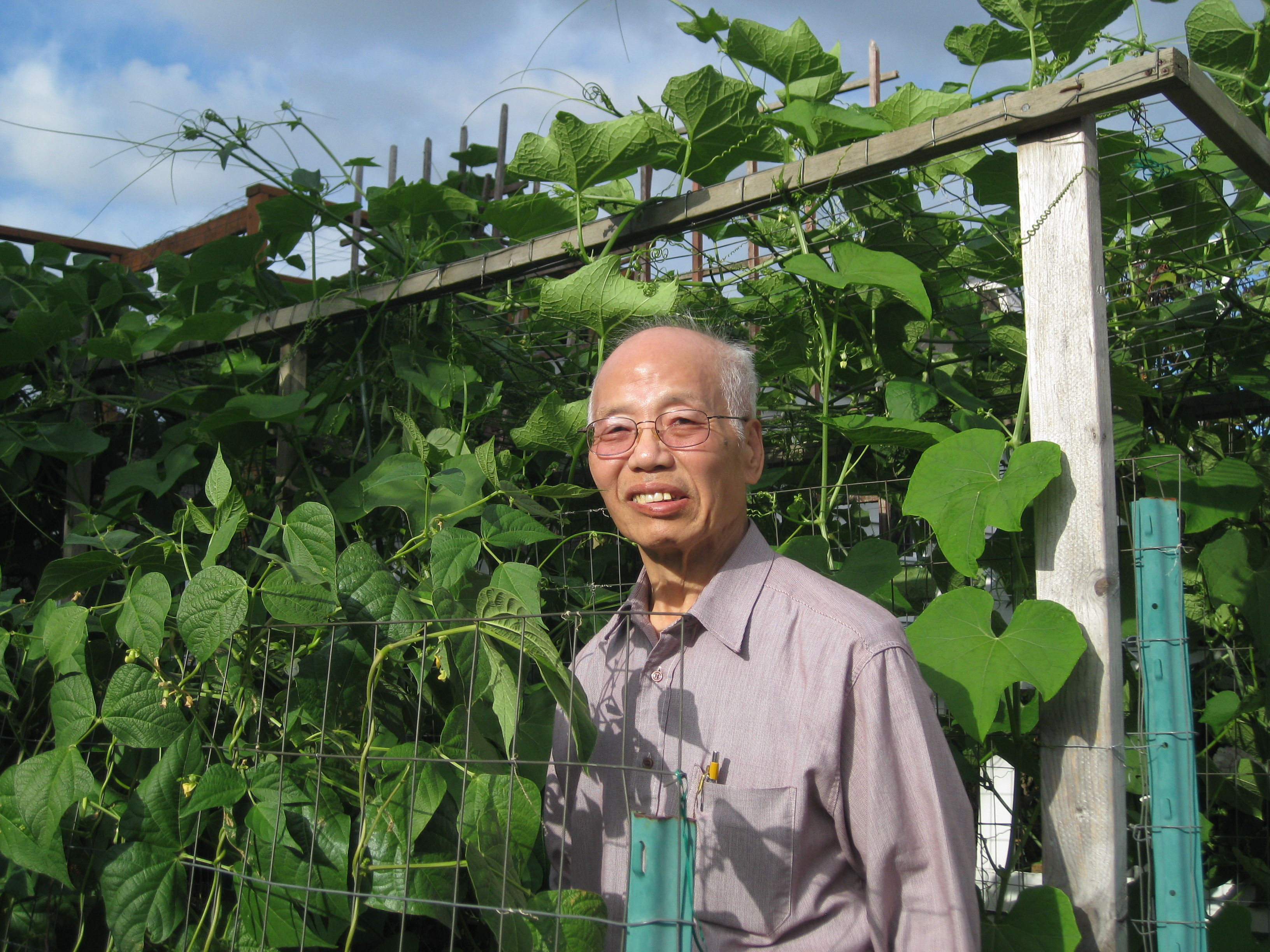 Grandpa in green beans