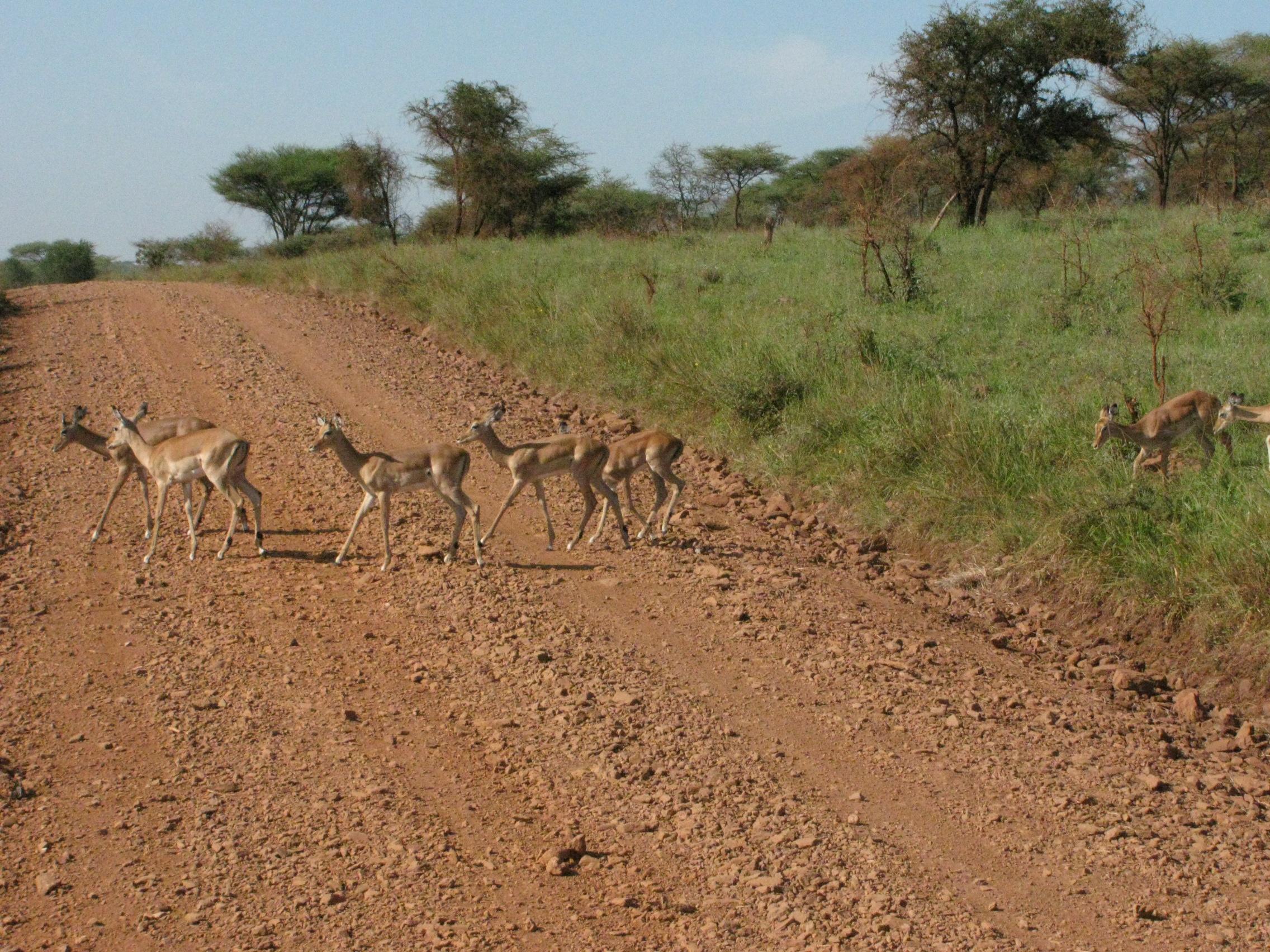 2008 Africa Tanzania safari