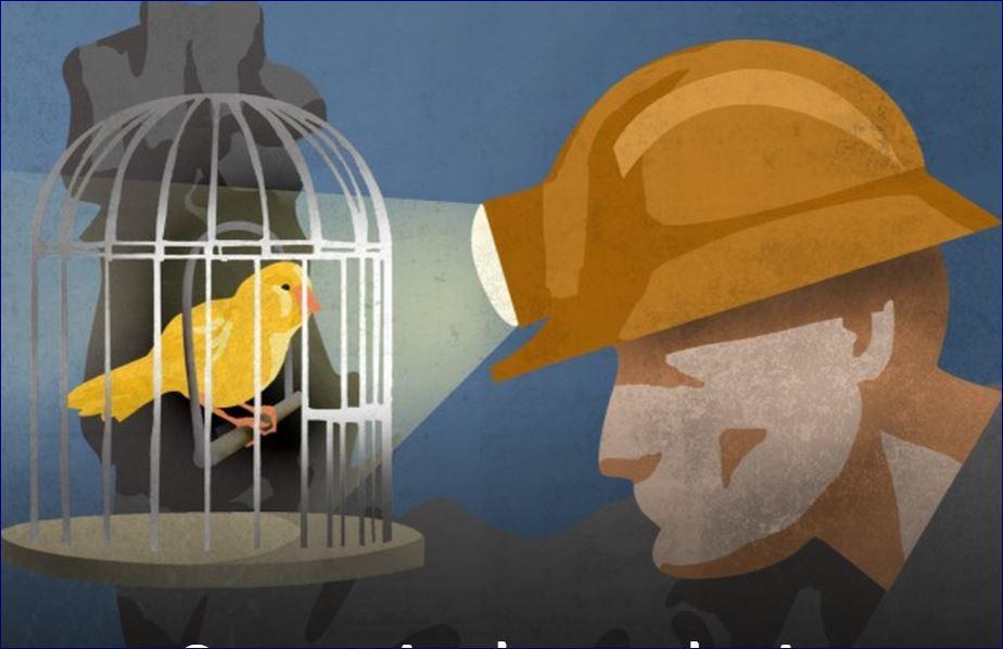 canary2