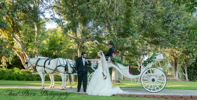 Bride and Groom Horse and Carriage