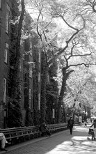 NY Central Park II