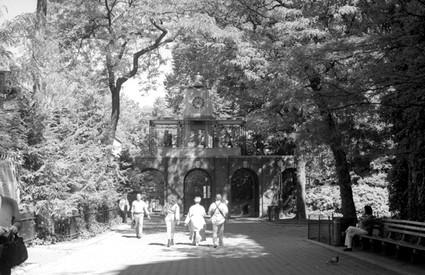 NY Central Park VIII