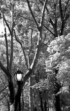 NY Central Park VI