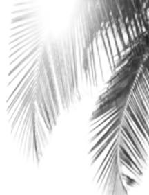 Logo_Palm_Leaves_Background_Removed-remo