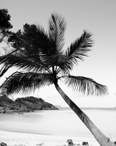 Black and White Palm.jpg