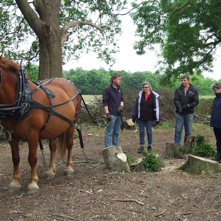 Horse Logging Experience Day Wednesday 22nd September 2021