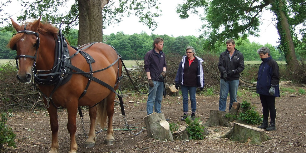 Horse Logging Experience Day Sunday10th February 2019