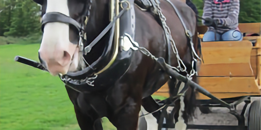 Carriage Driving Experience Day Wednesday 29th September 2021