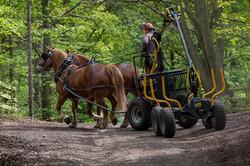 Horse Logging Forwarder