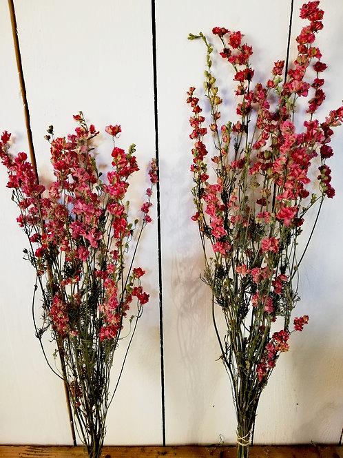 Pied d'alouette rose 80 cm