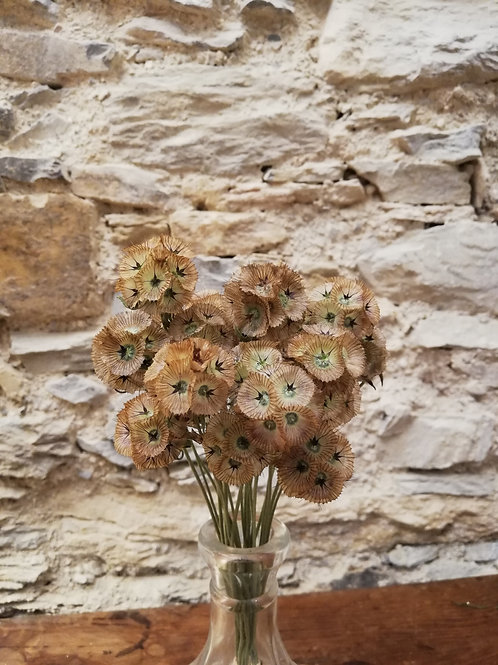 Mini bouquet Scabieuse étoilée
