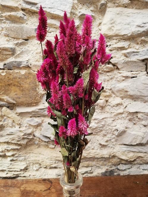Mini bouquet Célosie