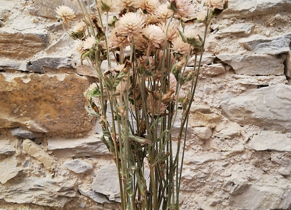 Mini bouquet Gomphrena Blanc
