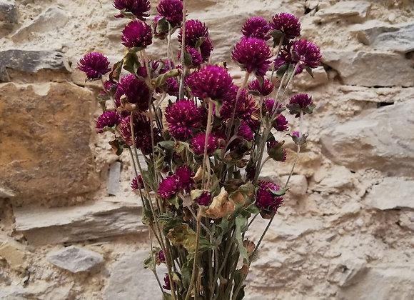 Mini bouquet Gomphrena violet