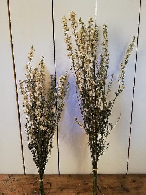 Pied d'alouette blanc 60cm
