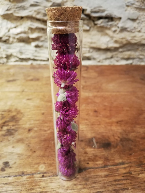 Gomphrena violet