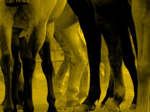 Pur-sang contre centaures : le nouveau combat à venir ?