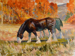 Shires 30x40