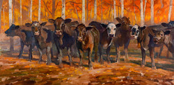 Fall Line Up 24x48