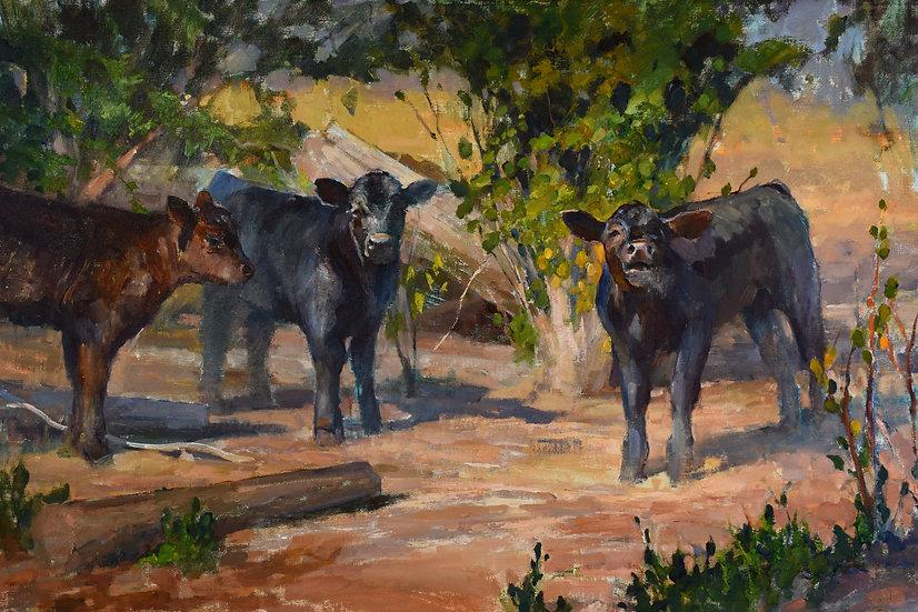 Spring Calves 24x36