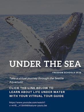 Aquarium Flyer.jpg
