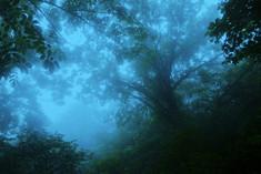 Jirisan 2007, 107x160cm