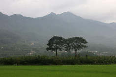 Jirisan 2041, 107x160cm