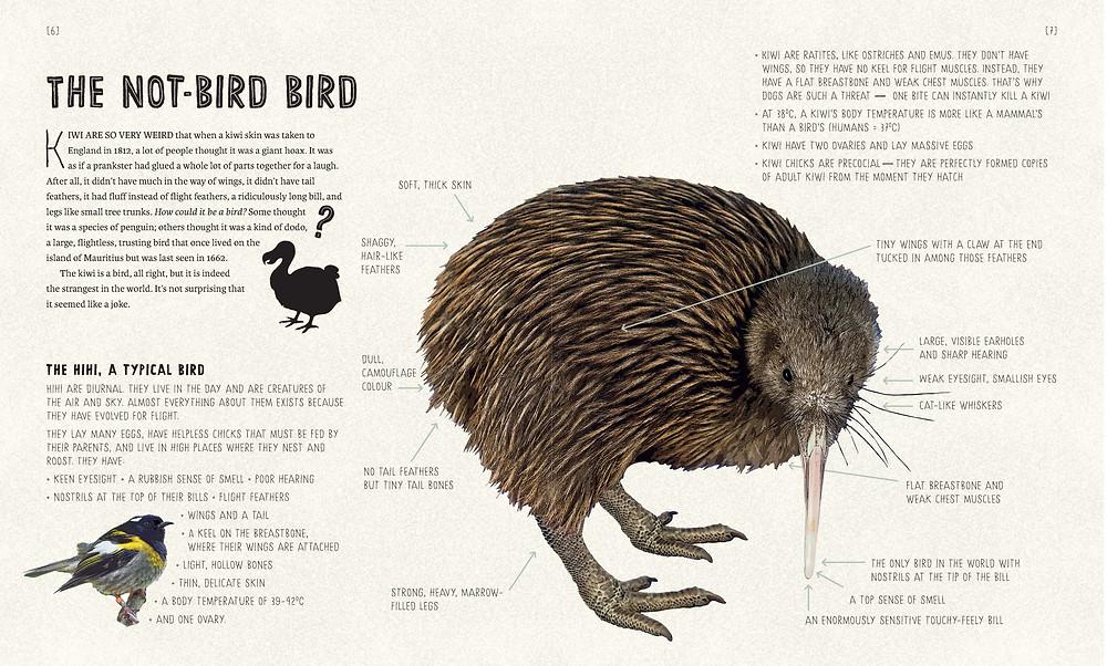 spread from three kiwi tales