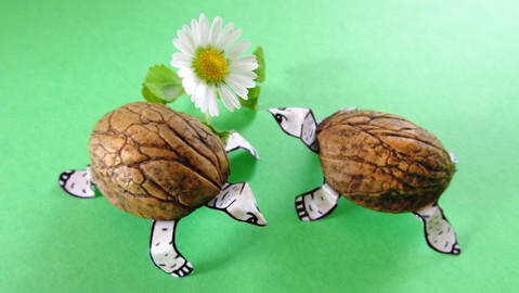 Crafts with Fifi: Tiny Walnut Tortoises