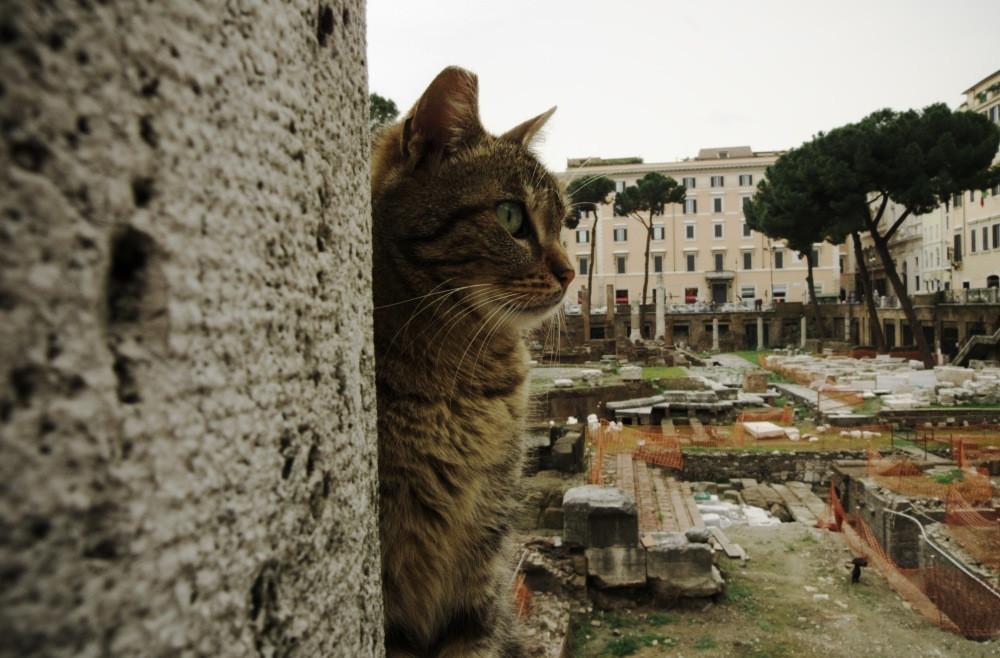cat at Largo di Torre Argentina