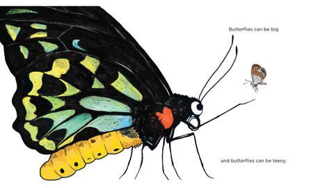 THE SAMPLING: Secret World of Butterflies