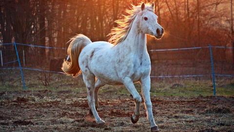 The Pony Book Club: a pre-teen respite