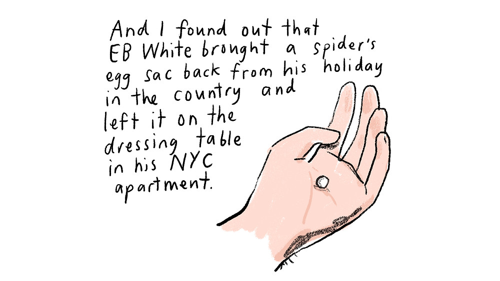 And I found out that EB White brught a spider's egg sac back from his holiday in the country and left it on the dressing table in his NYC apartment