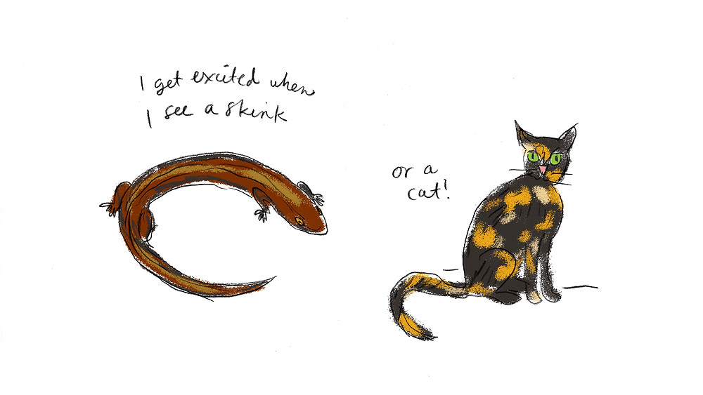 skink and cat