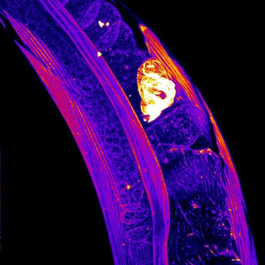 occupiedvsempty spermatheca.jpg