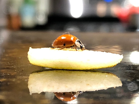 The Exquisite Joy of Ladybug