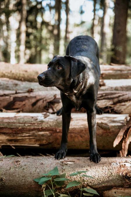 Wald-Hund-Fotografie