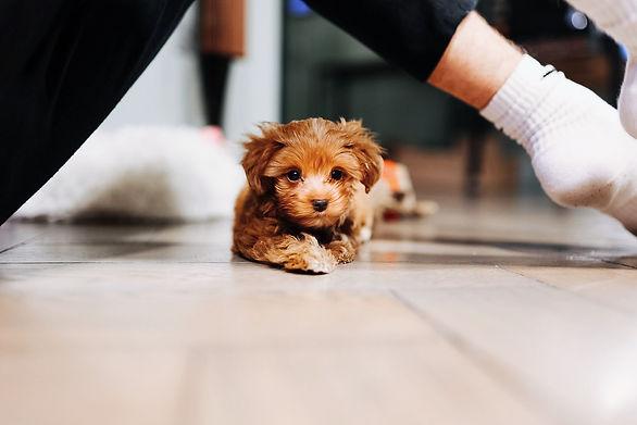 natuerlichhund.com