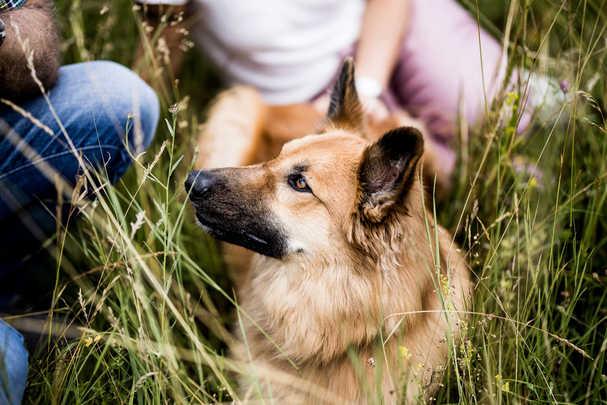 natuerlichhund-sandra-vergien-2A6A2089.j