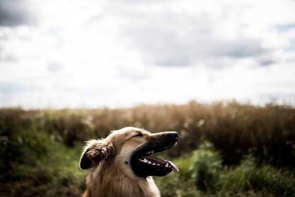 natuerlichhund-sandra-vergien-2A6A1885.j