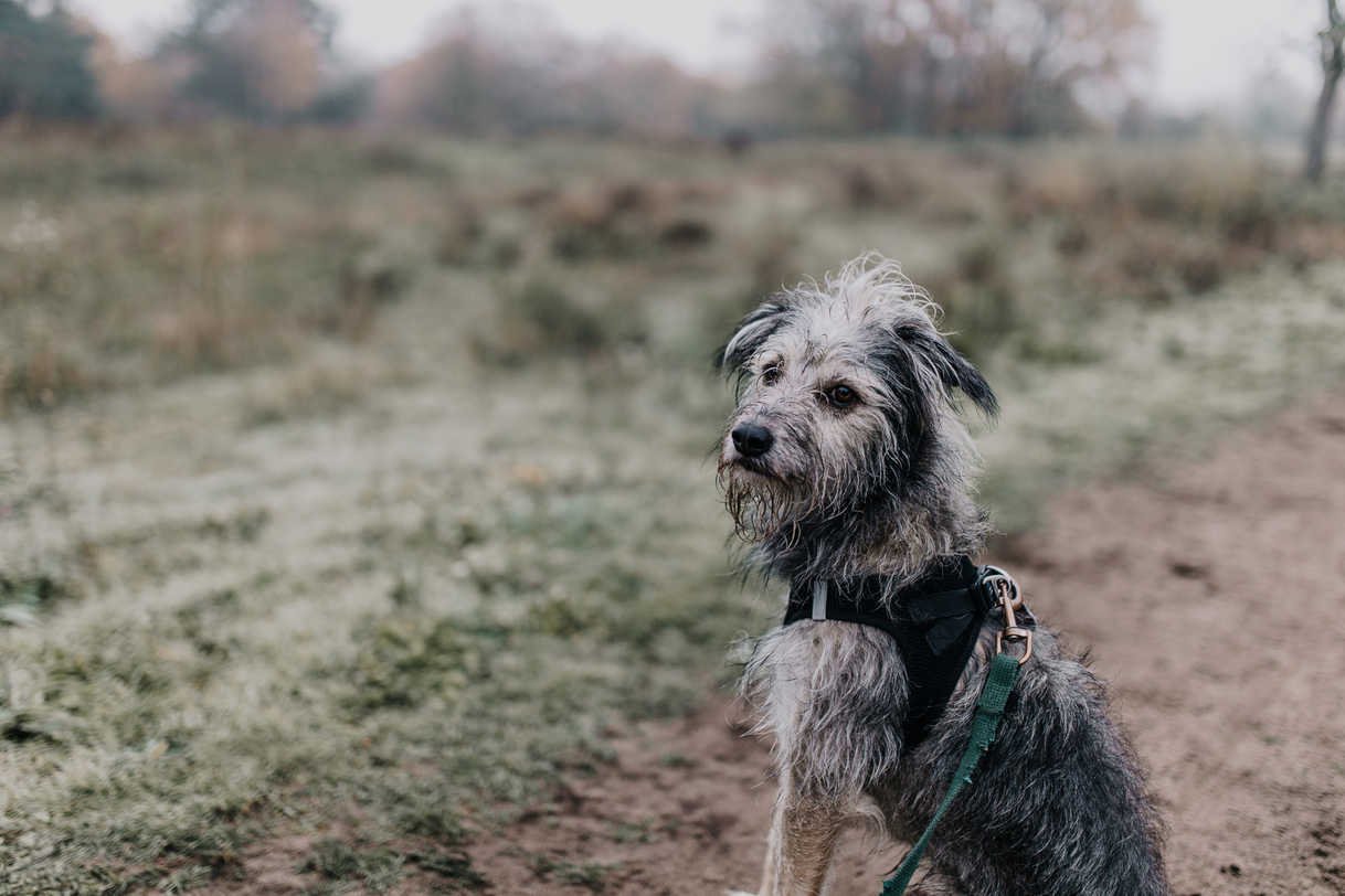 Foto-Hund-Portrait-Frankfurt.jpg