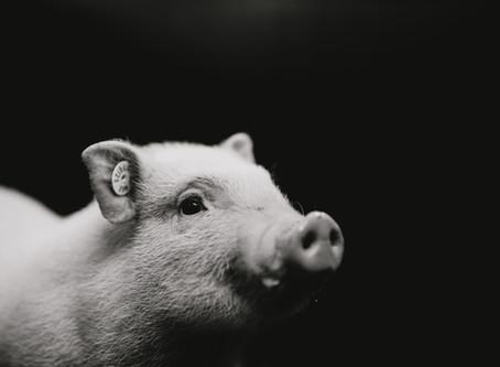 Glücksschwein Anneliese