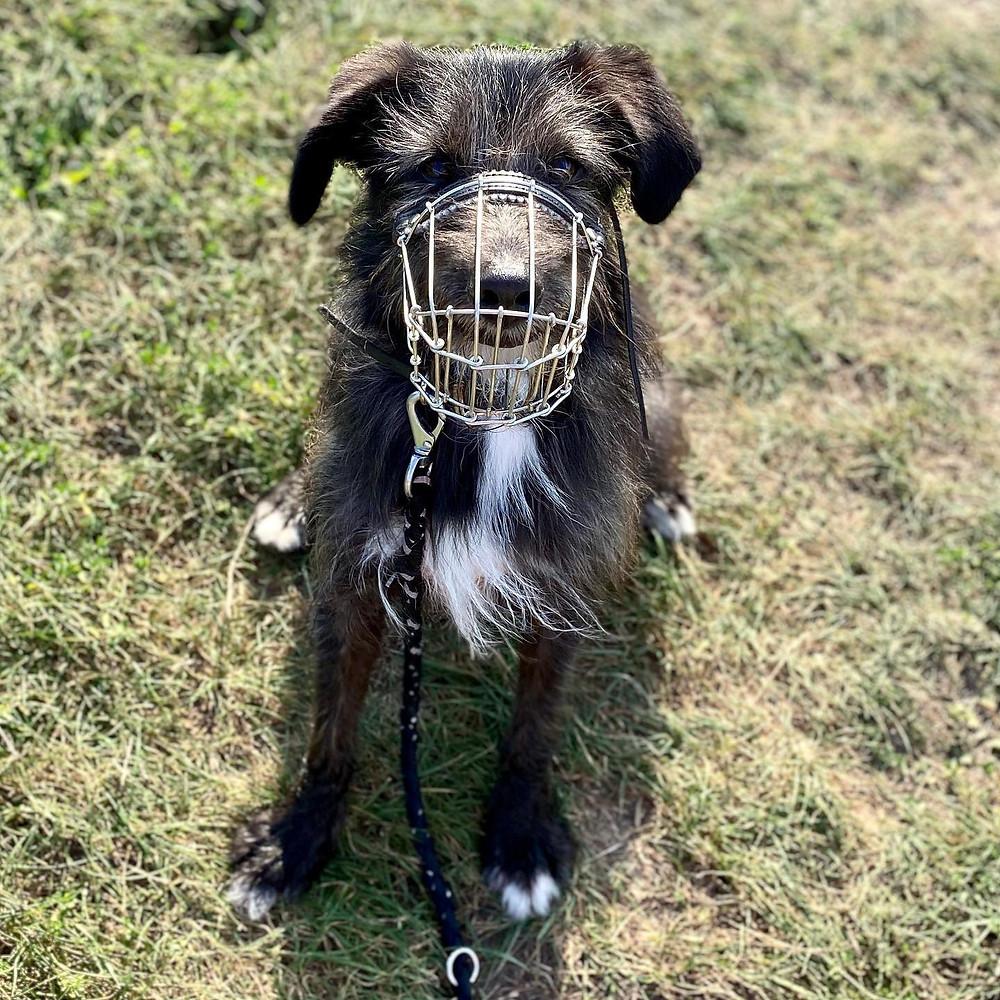 Hund-Wiese-fotografie-natuerlichhund