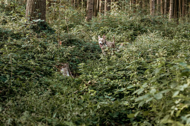 Hund-Wald-Fotografie