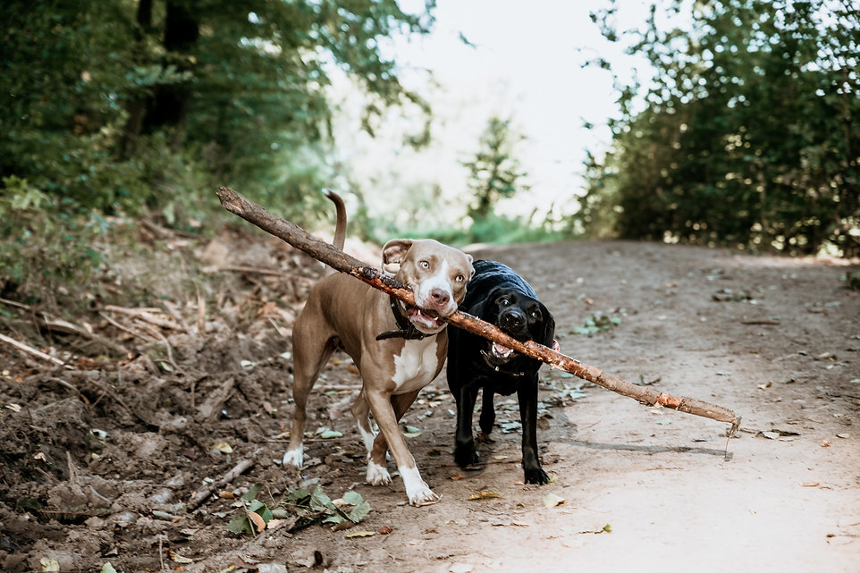 Hunde-Stock-Wald-Fotografie