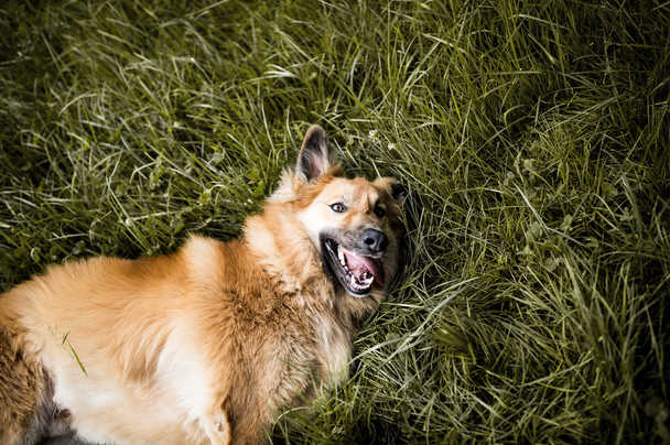 natuerlichhund-sandra-vergien-2A6A2200.j