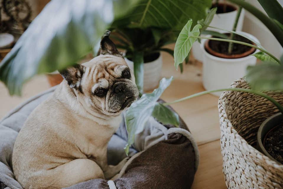 Getting-Ready-Hund-Pflanze