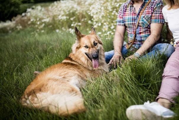 natuerlichhund-sandra-vergien-2A6A2654.j