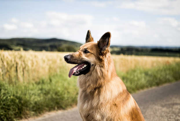natuerlichhund-sandra-vergien-2A6A1890.j