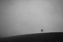 Одинокое дерево / Lonely tree